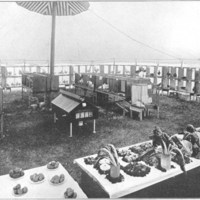 Vegetable and poultry show