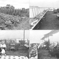 Employees' gardens and competitive exhibition
