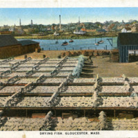 Drying fish, Gloucester, Mass.