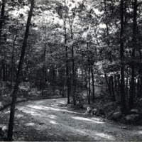 Great Woods Road, looking towards Walden Pond, Lynn Woods