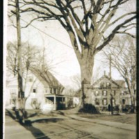 Rocky elm tree, Main Street, Saugus Center