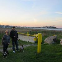 Walking the dogs at Deer Island